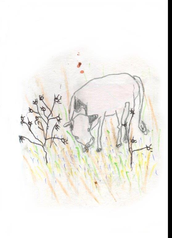 US18-la-vache